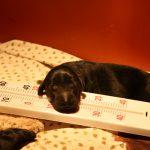 Pup kijkt hoe warm het is