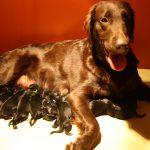 Zoey en der puppy`s