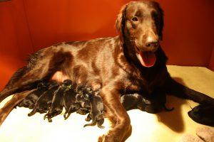 Zoey met der puppy`s