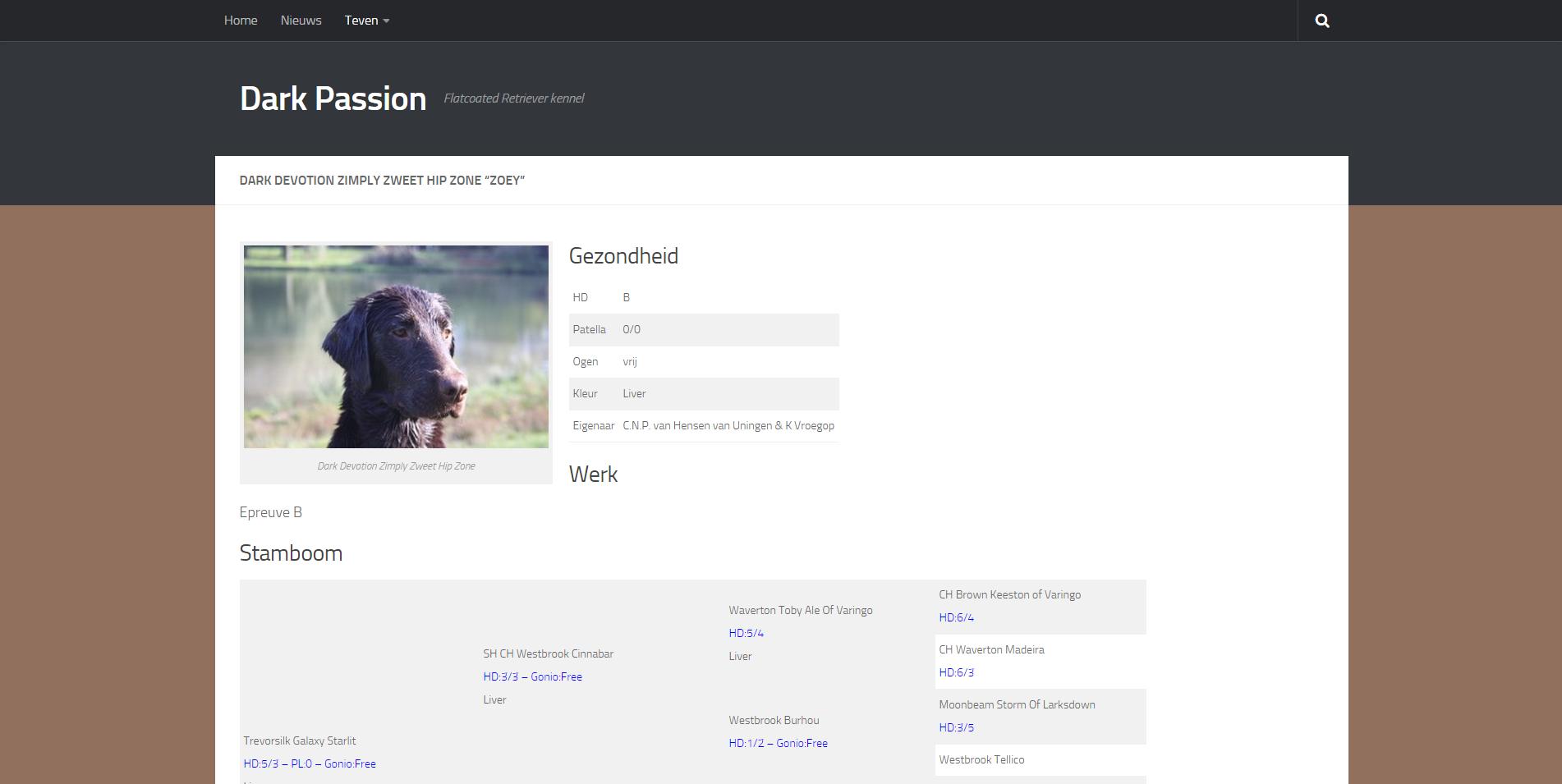 Eerste pagina van de website